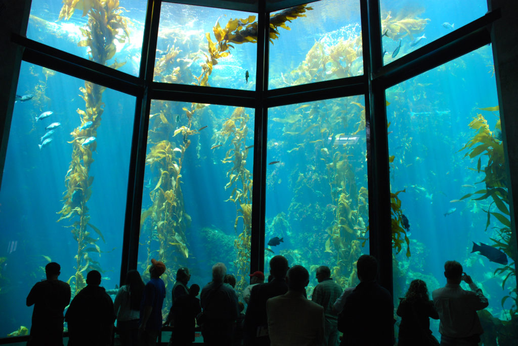 Monterey Bay Aquarium Kelp Forest